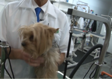Groom A Yorkie – Low Maintenance Techniques by Groomer Gregg