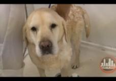 Groomer Gregg Dog Grooming and Pet Wellness Tips